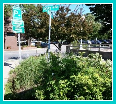 Downtown westport 06880 for Garden gateway