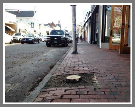 Main Street was looking a bit bedraggled after the removal of some downtown trees.