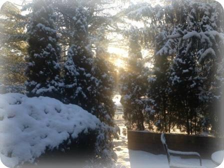 winter, Westport CT