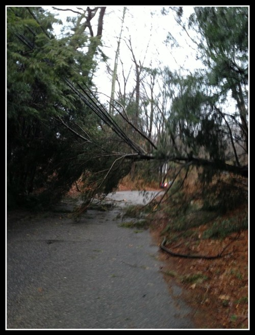 Staples junior Diego Alanis snapped this shot, of a snapped tree on Country Road yesterday morning.