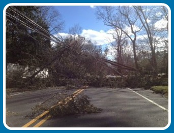 This was the scene yesterday morning -- and afternoon -- on North Avenue. The major north-south route -- including 2 schools -- was closed when a tree toppled in the early-morning windstorm.