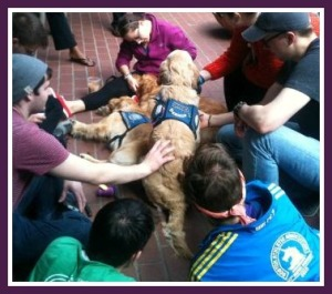 Emerson students petting comfort dogs.