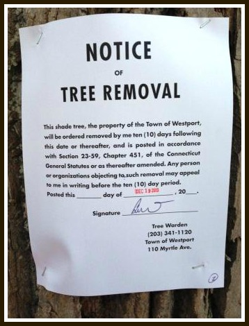 The notices give Westporters 10 days to contact the tree warden.