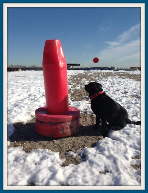 Buoy and dog - Chip Stephens