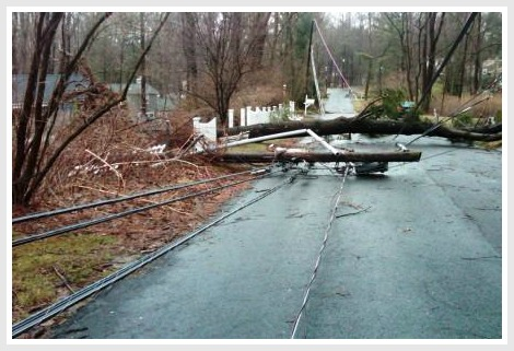 One of the many power lines brought down by trees during the March 2010 windstorm.