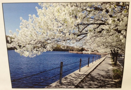 There are photos on the wall too. One employee posted his picture of Westport in the spring.
