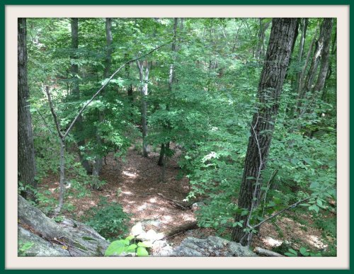 The view from a trail high in the Ordway Preserve.