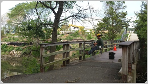 Tree work being done near the Imperial Avenue foot bridge.