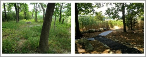 The William P. Teuscher Wetlands Preserve -- before and after.