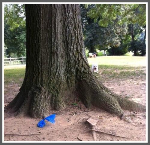 Winslow Park poop