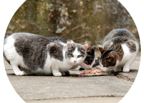 When feral cats multiply, it's no day at the beach.