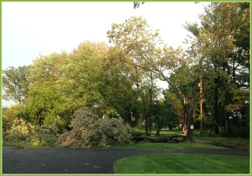 September 6 2014 storm - tree hit lightning Great Marsh Road