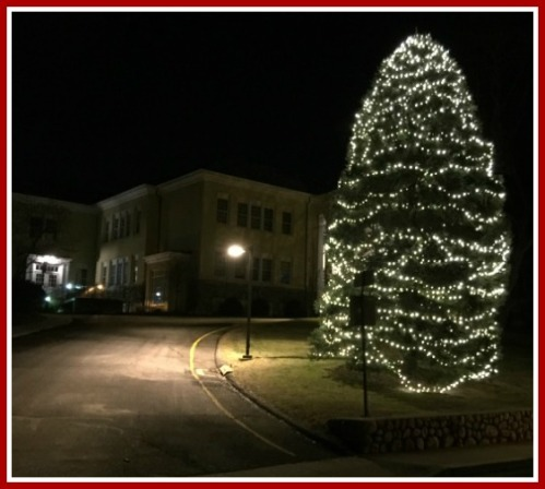The tree in front of Town Hall. (Photo/David Meth)