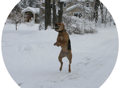 "Scott Smith's Miller is a ""bird dog."" – He loves chasing away squirrels poaching seeds scattered across the snow."