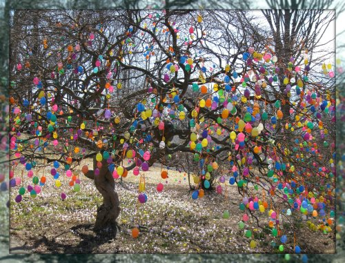 Jalna Jaeger's egg tree, on Thursday.