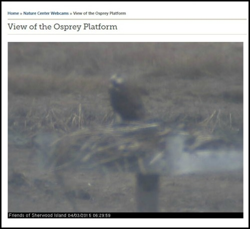 "The Sherwood Island ""osprey cam,"" earlier this morning."