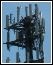 Osprey in cell tower at Exit 41 - Jo Ann Davidson