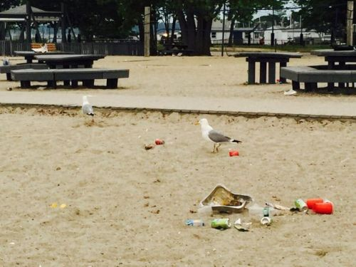 Cleanup - more seagulls - Betsy P Kahn