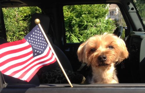 This is one very patriotic dog. (Photo/David Squires)