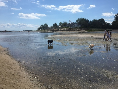 Dogs are supposed to be on leash at all Westport beaches in the summer. But a wide-open sandbar beckoned...