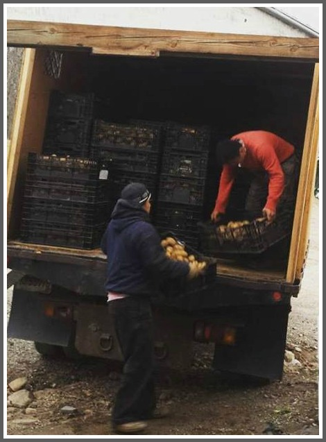 "Loading potatoes. Can you help ""unload"" them?"