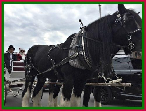 Horse carriage - Main Street Christmas 2015
