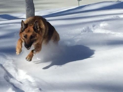 What dog doesn't love snow? (Photo/Ken Bernhard)