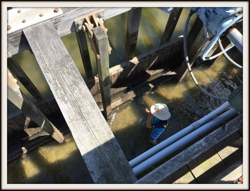Automated tidal gates help drain Sherwood Mill Pond -- a boon to oyster production. Last summer, a Weston boy played near the gates -- just as Jeff Northrop did when he was a kid.