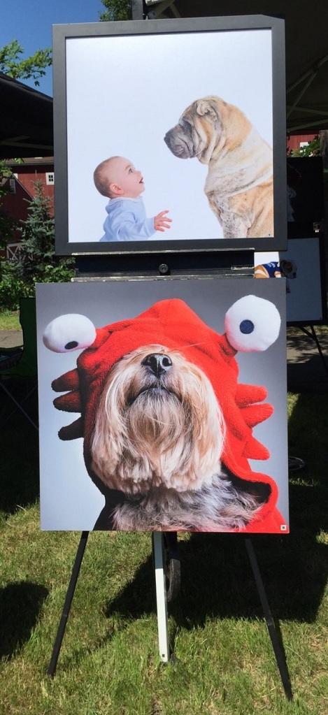 Dog Festival - 5