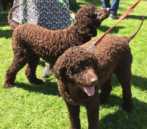 Dog Festival - 6