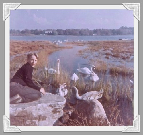 Mary Allen's son Chris, with Sherwood Mill Pond swans.