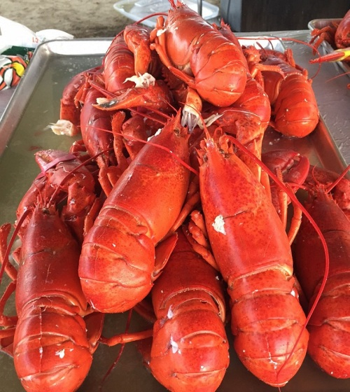 lobsterfest-fresh-lobsters