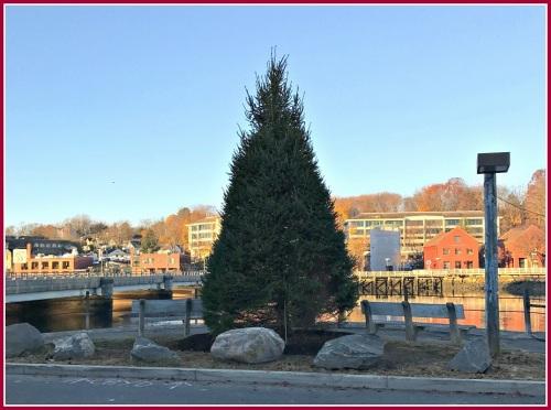 parker-harding-christmas-tree