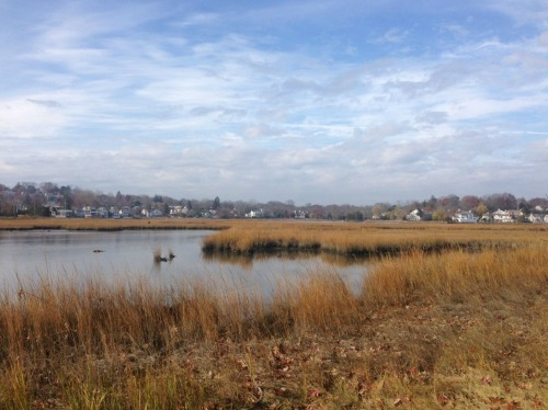 sherwood-island-view-of-mill-pond-steve-axthelm