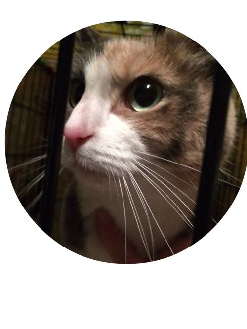 tina-wessen-cat